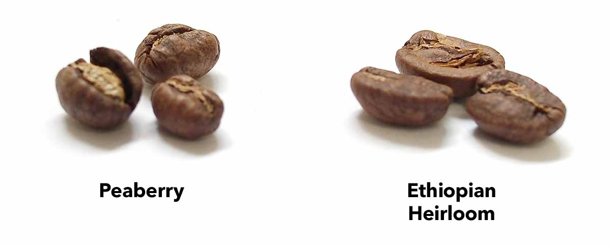 Comparing a peaberry bean with a typical bean (in this case, Ethiopian Heirloom)